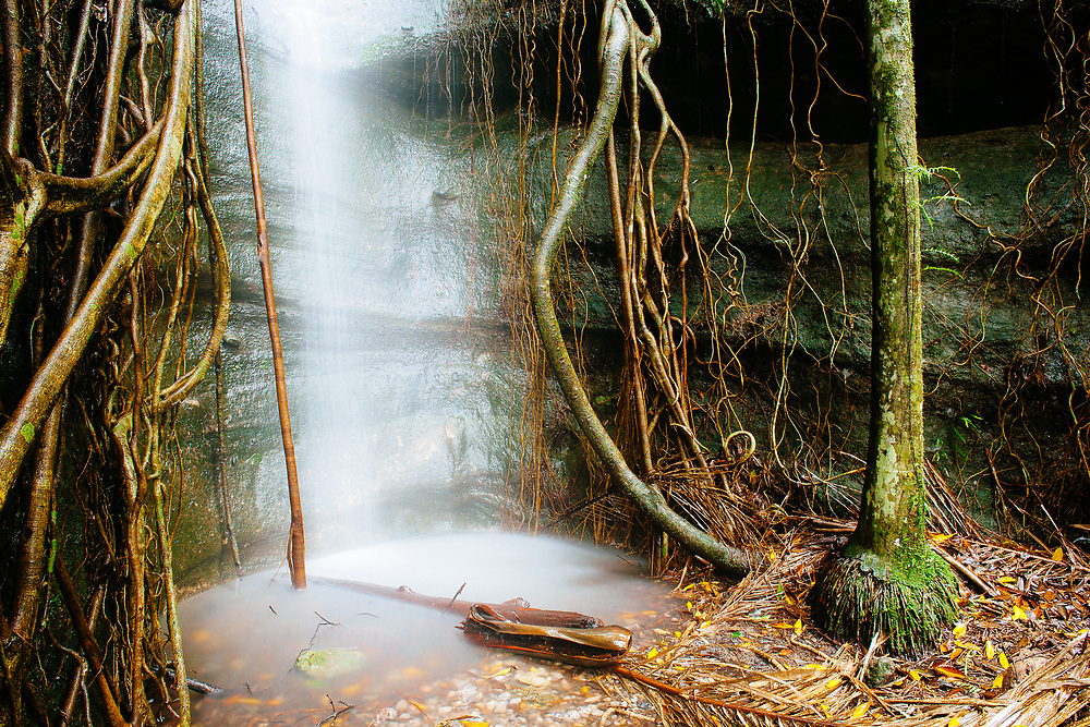 An unamed waterfall with ficus growing down its sides in Lamington National Park which periodically flows after heavy rain.