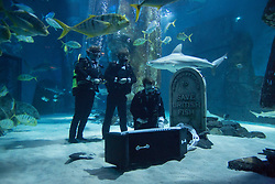 © licensed to London News Pictures. London, UK 12/02/2013. Aquarists at The Sea Life London holding an underwater funeral as they issue a warning about the potential fate of British marine life. The procession lead by Aquarist Pete Williams, taking place in the shark reef display of The Sea Life London in Westminster. Photo credit: Tolga Akmen/LNP