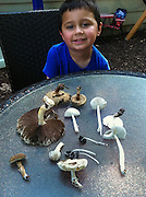 boy with mushroom collection