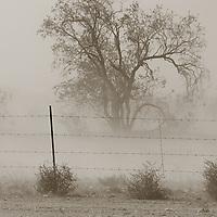 A dust storm rolls through San Tan Valley