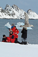 Model released photo of tourists taking a photo of a Brown Skua (Catharacta Antarctica ) in flight. at Aitcho Islands,  are a group of islands at the northern entrance to the English Strait.