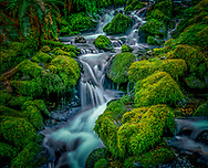 Thousands of small seasonal streams abound in the wet climate of the Pacific temperate rainforests that are found in the Cascades and Olympic mountain ranges of Washington, Oregon and California.