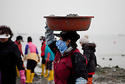 "Woman carrying a pot with mussels on her head at the open ""Mysterious Sea Road"" in Hoedong shore (Jindo island). Jindo is the 3rd biggest island in South Korea located in the South-West end of the country and famous for the ""Mysterious Sea Route"" or ""Moses Miracle"". Every spring thousands flock to the shores of Jindo to walk the mysterious route that stretches roughly three kilometers from Hoedong to the distant island of Modo. Materializing from the rise and fall of the tides, the divide can reach as wide as forty meters."