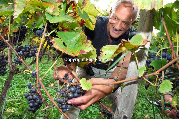 Nederland, Groesbeek, 3-10-2013 Bij de biologische wijngaard de Colonjes is men bezig met de druivenoogst van dit seizoen. Wijnboer Freek Verhoeven knipt een tros druiven, is samen met vrijwilligers bezig met de oogst .  Beschimmelde en aangetaste vruchten worden zoveel mogelijk weggeknipt. Kwaliteit gaat hier boven kwantiteit. Groesbeek afficheert zichzelf als het wijndorp van Nederland omdat er de kaarlijkse wijnfeesten zijn en verschillende boeren druiven verbouwen. De oogst lijkt goed. Foto: Flip Franssen