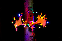 Moose antlers with Christmas lights