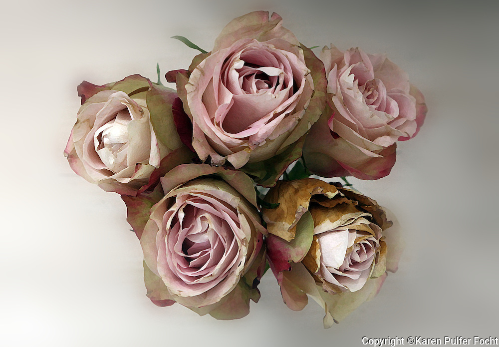 Flowers, Pink, Shabby Chic, Roses, Beige