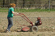 Chester, New York - Laura Nywening prepares the soil before planting more cabbage at Peace and Carrots Farm  on April 23, 2013. The CSA (Community Supported Agriculture) farm is in its first growing season.