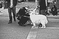 Oakland police officer greets  dogs on 14th Street, during Occupy Oakland demonstration in Oakland, CA.  Copyright 2011 Reid McNally.