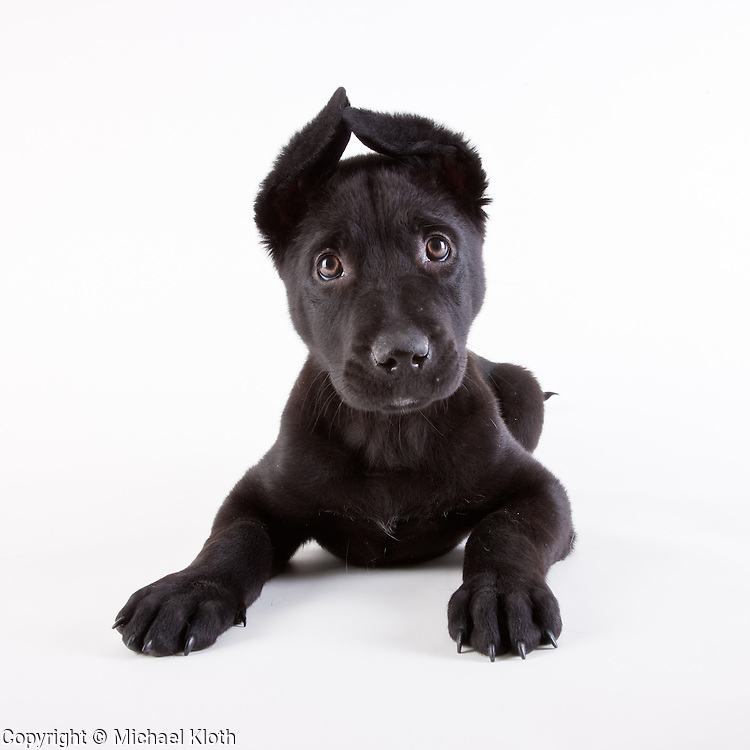 This puppy made it in to the Shelter Puppies book.  I love those ears!