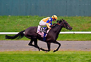 """Stacelita"" with soon to be elected into the riders Hall of Fame jockey, Ramon Dominguez, aboard, winning the Flower Bowl in 2011."