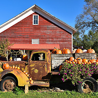 Pumpkins at Fairhaven Farm in South Haven, Minnesota<br /> Fairhaven Farm makes a delightful family outing in mid-October. This picturesque Yankee barn was built in the 1860s and once was a stage coach stop.  In 1985, Marsha Anklam began her dream by purchasing this 50 acre property in the heart of Minnesota. Then she and David Macgregor slowly converted it into a fruit farm. This is a popular venue during autumn weekends to pick-your-own apples, pumpkins and gourds followed by a horse-drawn hayride.