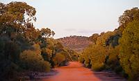 Sandy red dirt track through mallee bushland, Australia