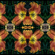 Computer abstract of altered and enhancement of Colorful flora as digital computer art.<br /> <br /> Two or more layers were used to enhance, alter, manipulate the image, creating an abstract surrealistic mirrored symmetry.