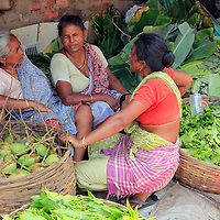 Asia, India, Calcutta. Scene from the flower market in Calcutta - three women chatting amongst the greens.
