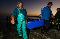 Small-scale commercial fisher catch of Yellowtail, Struisbaai, Western Cape, South Africa