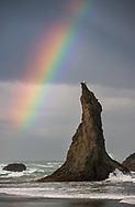 Rainbow over seagull and coastal sea stack, Bandon, Oregon