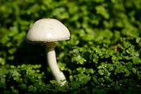 Mushroom, Kalk Bay/Simonstown Generic Photos, Cape Town South Africa