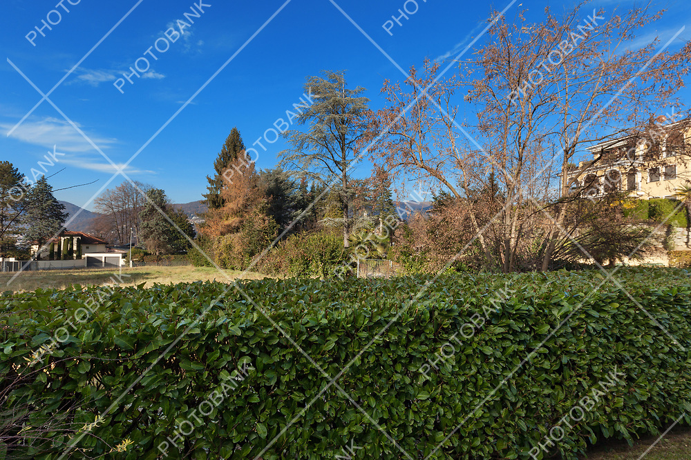 landscape with blue sky, hedge in the foreground