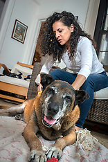 Dyngo Military Working Dog Final Selects