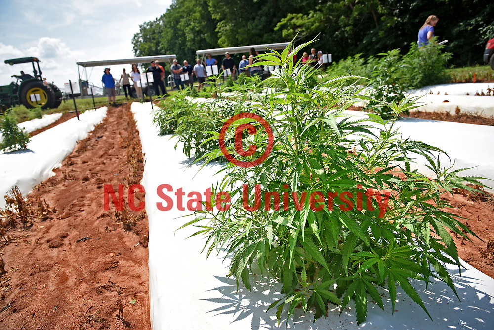 Law enforcement officials take a tour of industrial hemp growing at the Piedmont Research Station outside Salisbury.