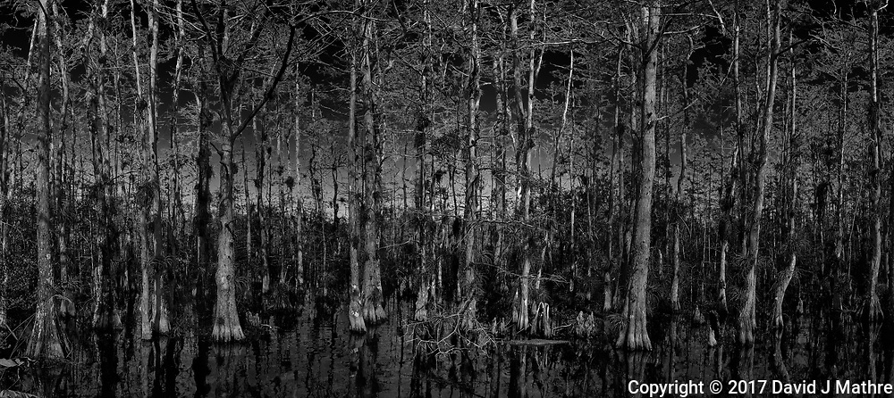 Cypress Swamp along Loop Road in Big Cypress National Preserve. Winter Nature in Florida Composite of 5 images taken with a Leica T camera and 11-23 mm lens.