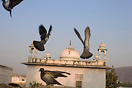 Birds and a Shiva-temple, Pushkar, Rajasthan, India