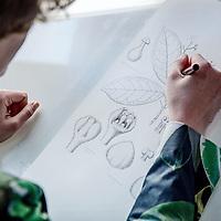 Nederland, Leiden, 12 april 2017.<br /> Esm&eacute;e Winkel uit Leiden is op dit moment de enige beroeps botanisch wetenschappelijk illustrator. In 2013 studeerde zij daarvoor af in Maastricht. Ze werkt nu bij Naturalis in Leiden. <br /> Op de foto: Esmee aan het werk in het Herbarium van Naturalis.<br /> <br /> <br /> Foto: Jean-Pierre Jans