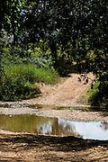 Januaria_MG, Brasil...A fazenda Agroecologica Soma, se intitula uma fazenda produtora de agua. Localiza no municipio de Januaria, a 250 km de Montes Claros, usa a tecnica de Barraginhas ou Bacias de Captacao de Agua de Chuva para recuperar os lencois freaticos e consequentemente os rios da regiao. Em 2005, foram construidas mais de 300 barraginhas na regiao, e acredita-se que o volume de agua dos lencois freaticos cresceu, inclusive com a recuperacao de um rio que corta a propriedade...Na foto, detalhe do Rio Tamboril, um dos corregos que corta a fazenda e teve o volume de agua aumentada devido a tecnica aplicada...The Soma Agroecology farm, is called a farm producing water. Located in the city of Januaria, 250 km from Montes Claros, uses the technique  rainwater catchment to recover the ground water and consequently the rivers of the region. On 2005, they built 300 dam or rainwater catchment in the region, and it is believed that the volume of water of groundwater has grown, including the recovery of a river in the property...In this photo, the Tamboril river...Foto: BRUNO MAGALHAES / NITRO