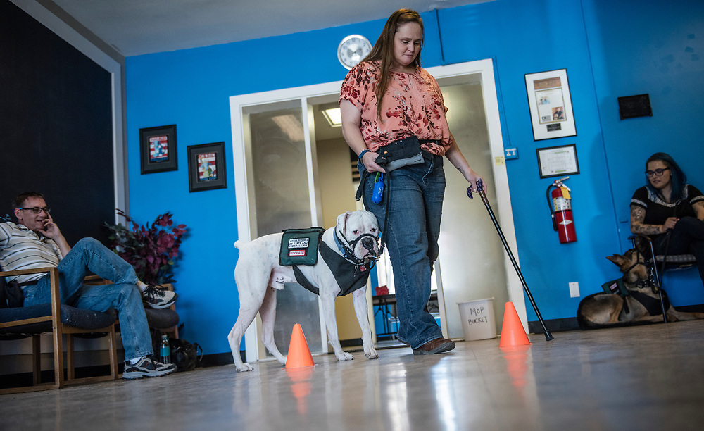 rer061217k/metro/June 12, 2017/Albuquerque Journal<br /> Carol Laman(Cq),center, a former member of the Navy walks through an obstacle course with her rescue dog Captain America during a training session at the Paws and Stripes facility in Albuquerque Monday afternoon. Paws and Stripes provides service dogs for military veterans with post-traumatic stress disorder and brain injuries through integrating service dog training and education with mental health support <br /> Roberto E. Rosales/Albuquerque Journal