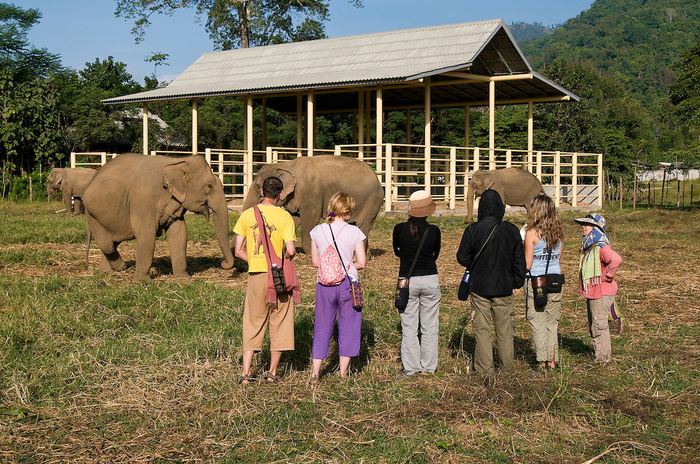 "Jody Thomas (right) leads tourists and volunteers on a morning walk at the Elephant Nature Park near Chiang Mai, Thailand.  Sangduen ""Lek"" Chailert founded the park as a sanctuary and rescue centre for elephants.  The park currently has 32 elephants sponsored and supported by volunteers from all over the world."