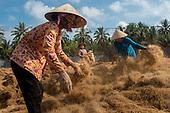 Vietnam - Coconut Island
