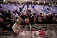 Visitors to the  annual Royal Pigeon Racing Association Show of the Year at the Winter Gardens, Blackpool, inspecting individual cages with prize-winning birds in the main ballroom. The two-day show takes place each year in Blackpool and attracts 4000 entries from pigeon fanciers from all over the world. The two-day event attracted 20,000 competitors and spectators.