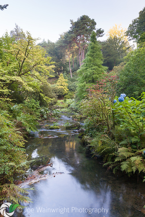 A misty autumn morning in The Dell at Bodnant Garden, North Wales