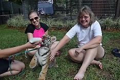 12-18-16 12:30 Swim otter & Tiger