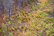 Autumn colours on mountain slopes near Plav, Montenegro, in October. © Rudolf Abraham