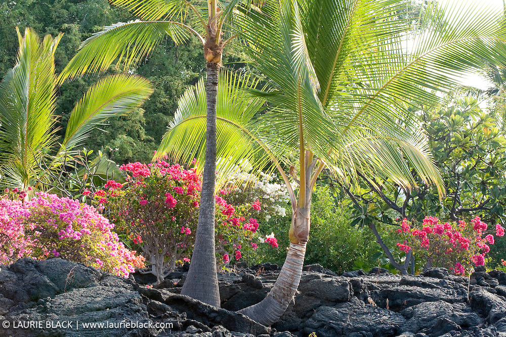 Palms and blossoms in lava