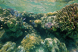 Corals in Clerke Lagoon at the Rowley Shoals.