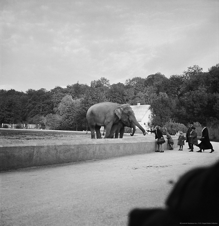 Elephant at Munich Zoo, Munich, c. 1931