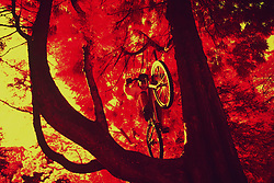 Here's trials rider Mikey Mayhem, who hopped over 10 feet from the ground to this tree branch, captured with color infrared film and specialized filters.
