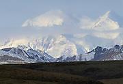 Mt. McKinley, Mount McKinley, Caribou, Caribou Herd, Herd, Denali, Denali National Park, Alaska