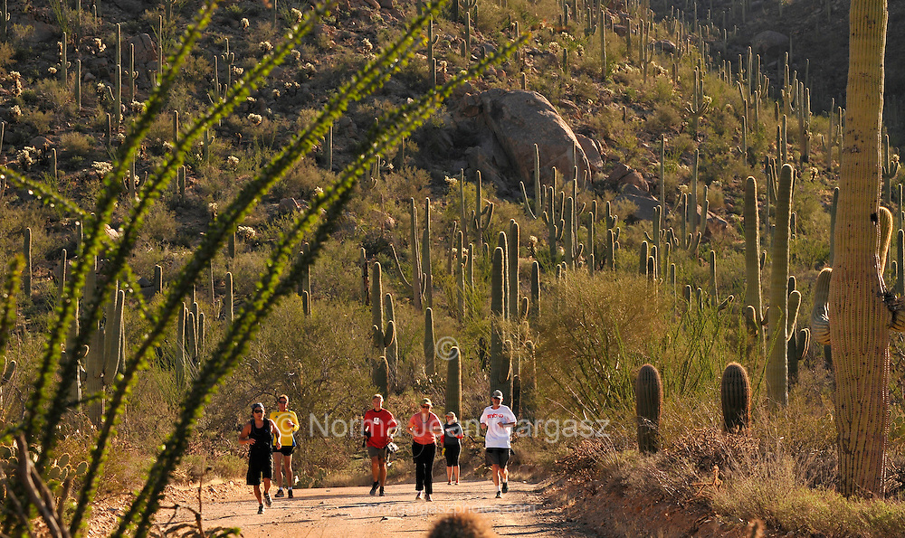Participants in a 5-mile run/walk through Saguaro National Park in the Sonoran Desert, Tucson, Arizona, USA, enjoy a 72 degree day in contrast to the sub zero temperatures of the polar vortex that hit much of the eastern portion of the country in recent days.  Saguaro National Park and Friends of Saguaro National Park hosted the run as part of the Tucson Beyond events, a community-wide outdoor festival that celebrates the spirit of community and the beauty of the natural surroundings. It is a day of fitness with activities planned for people of all ages, abilities and fitness levels. This event was one of many throughout the Tucson area to commemorate the January 8, 2011 shooting that seriously injured Arizona Congresswoman Gabrielle Giffords and killed <br /> several people.