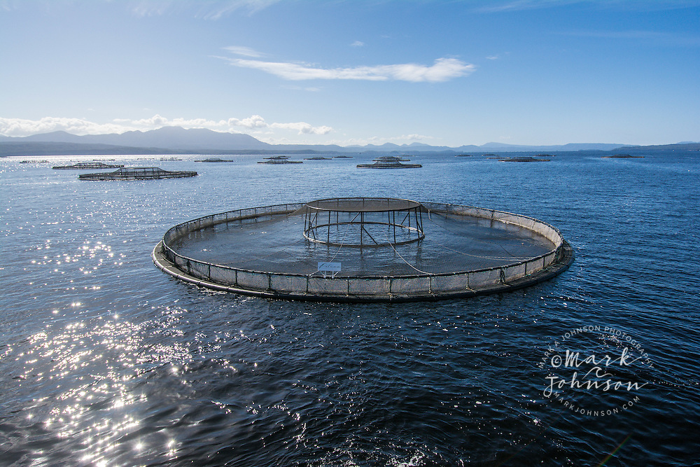 Atlantic Salmon aquaculture farming, Macquarie Harbor, Tasmania, Australia