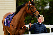 "Miss Gargar ridden by Richard Kingscote and trained by Harry Dunlop in the ""Around The Paddock"" At Valuerater.Co.Uk Handicap race.  - Mandatory by-line: Ryan Hiscott/JMP - 01/05/2019 - HORSE RACING - Bath Racecourse - Bath, England - Wednesday 1 May 2019 Race Meeting"