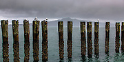 Okahu Bay breakwater piles, Auckland, New Zealand.