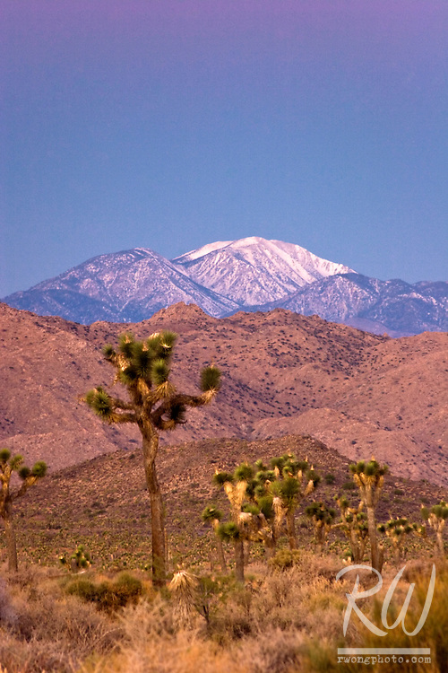 Earth Shadow over Mount San Gorgonio, Joshua Tree National Park, California