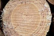 Nederland, Overasselt, 6-09-2013 Staatsbosbeheer kapt 40 hectare bomen in de Overasseltse en Hatertse vennen om te voorkomen dat grote delen van dit  natuurgebied droog vallen. De afgelopen decenia is het vennengebied dichtgegroeid. Door de hoge verdamping van het dennenbos bereikt het regenwater de vennen niet meer. Onder de vennen zit een ondoordringbare kleilaag waardoor het ven niet in contact staat met grondwater. Foto: Flip Franssen/Hollandse Hoogte