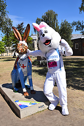 Run Norwich annual 10k road running race, 5 August 2018. Posing next to one of the GoGoHares in Cathedral Close