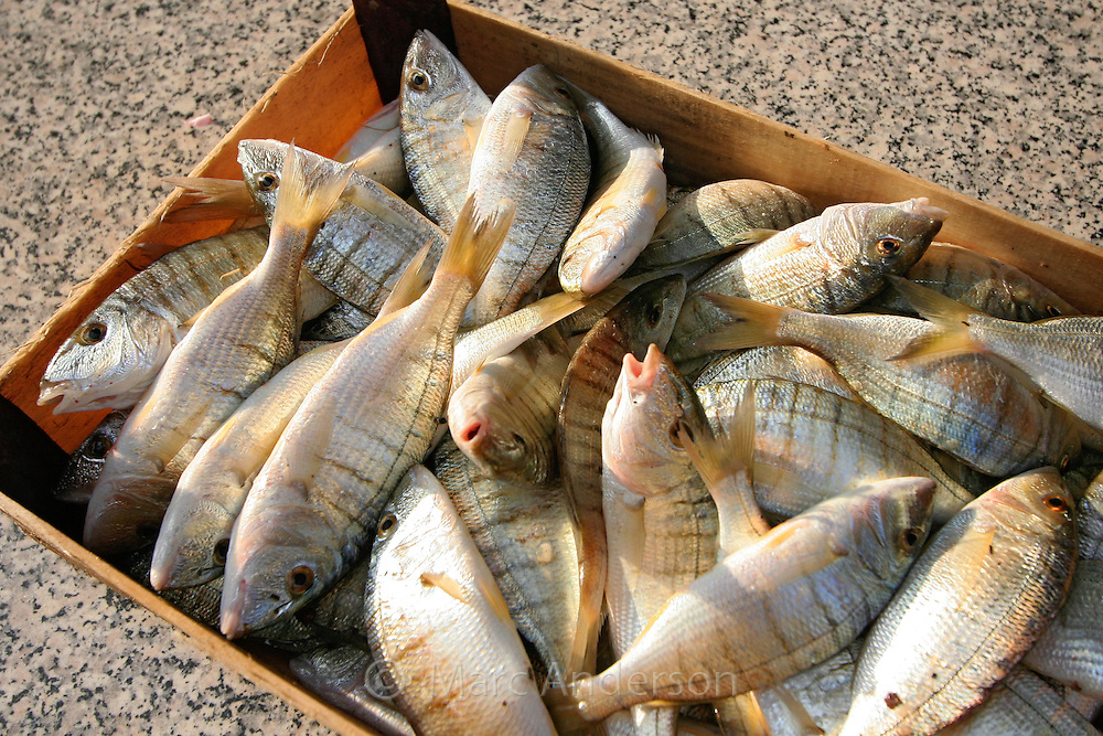 Crate of fresh fish, Italy