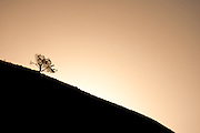 Lone tree on horizon, Drakensberg Mountains, South Africa.