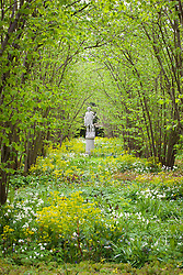 The Nuttery at Sissinghurst Castle Garden in spring. Statue of Dionysus. Euphorbia amygdaloides var. robbiae and Hyacinthoides non-scripta 'Alba' in the foreground. White Bluebell, Wood Spurge